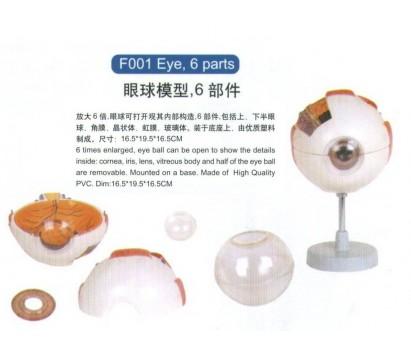 Eye (6 parts)